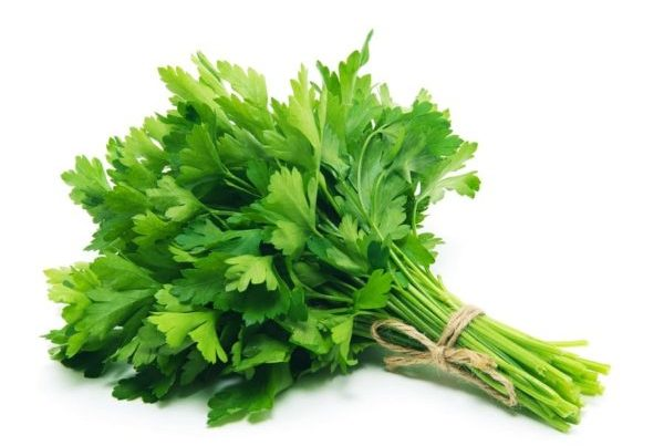 Dhania Pata / Coriander Leaves