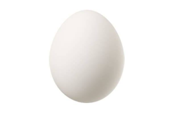 Poultry Egg
