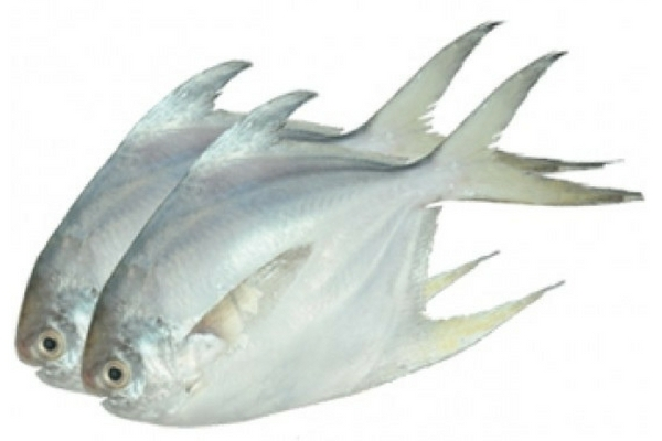 Pomfret Fish (medium size)